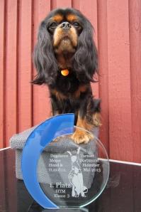 Bella med sin sidste HTm præmie, 1. vinder i HTM 3 i Dortmund